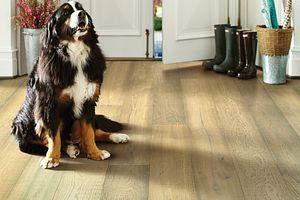Shaw Hardwood, Floorte Exquisite Worthington